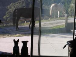 pups in studio seeing horses
